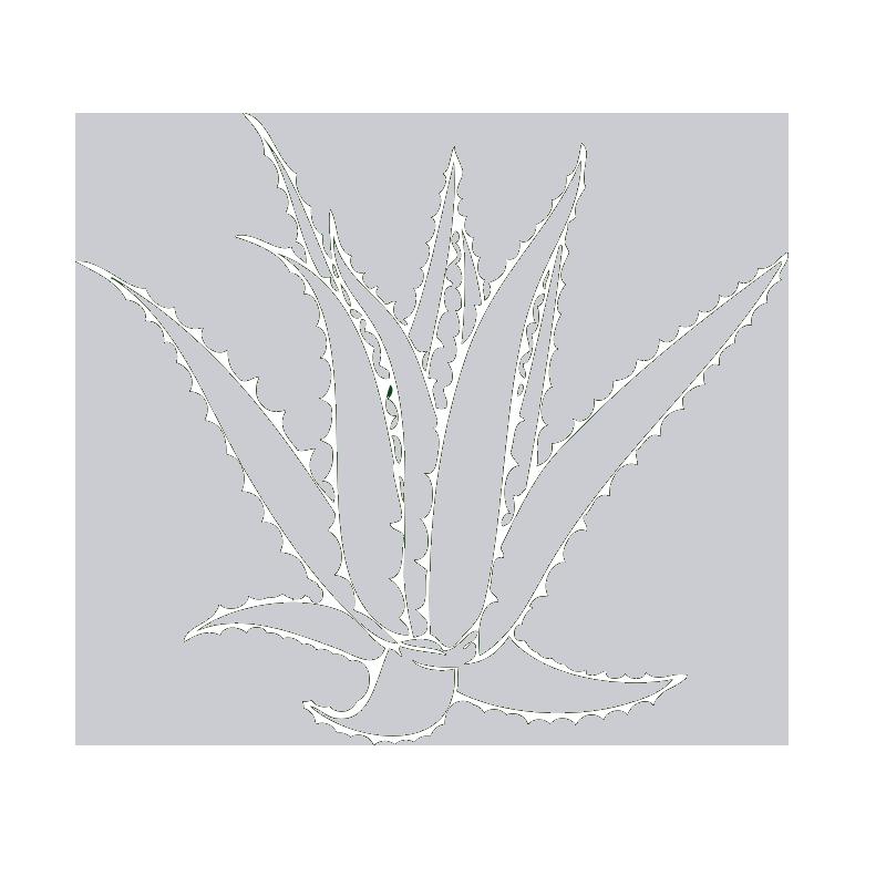 aloe-vera-icon
